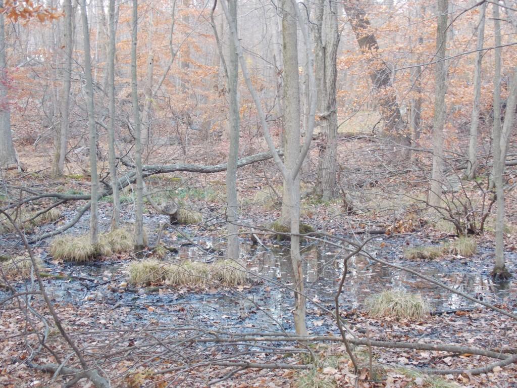Hermit's Wetland